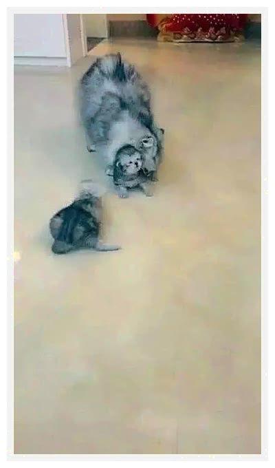 沐鸣平台装修网 主人偷偷带小猫咪去客厅玩,母猫发现后一脸严肃