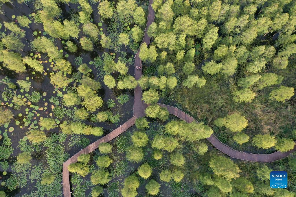 Aerial photo taken on Sept. 14, 2021 shows a view of the Chishan Lake National Wetland Park in Chuzhou, east China's Anhui Province. After years of ecological restoration, the Chishan Lake National Wetland Park has become a paradise of birds and fowls. (Xinhua/Cao Li)