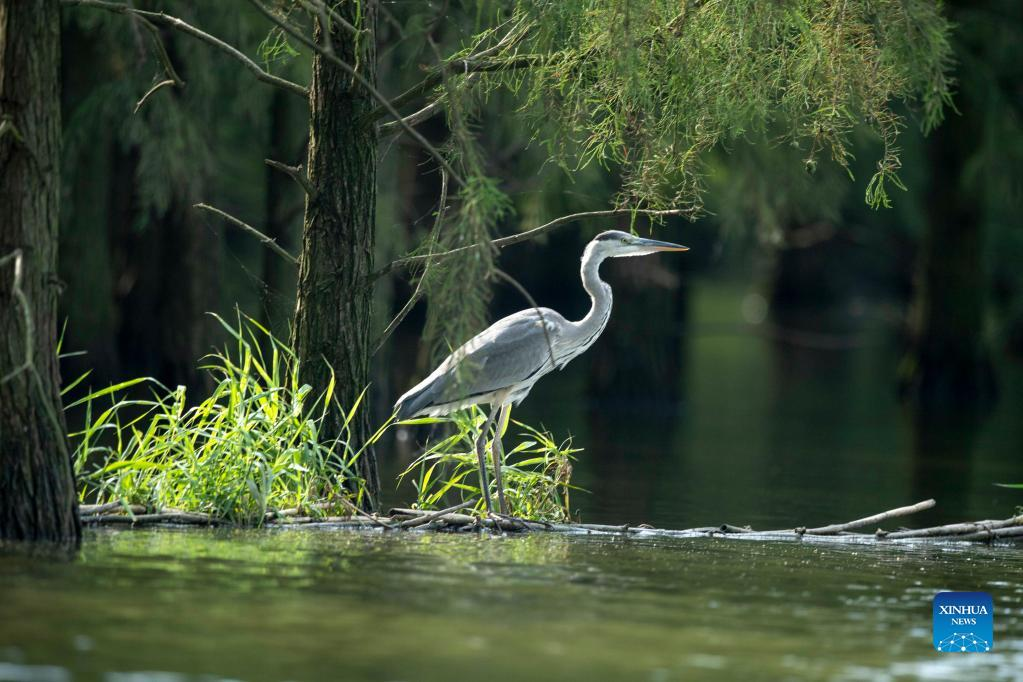 East China's wetland park becomes paradise of birds and fowls
