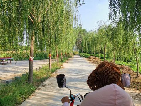 农村的休闲活动广场,周边杨柳依依,风景不错