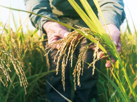 用纳米农药科技守护食品安全防线