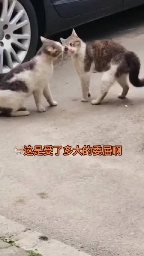 两只小猫咪的样子,像极了男女朋友的相处