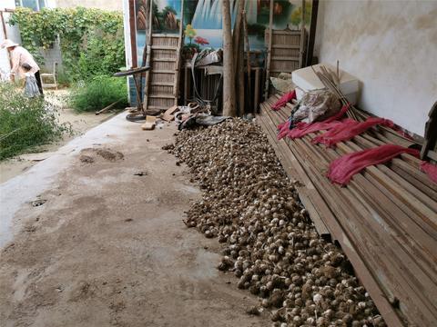 去邻居家摘葡萄,好奇他们家这堆大蒜,吃得完吗