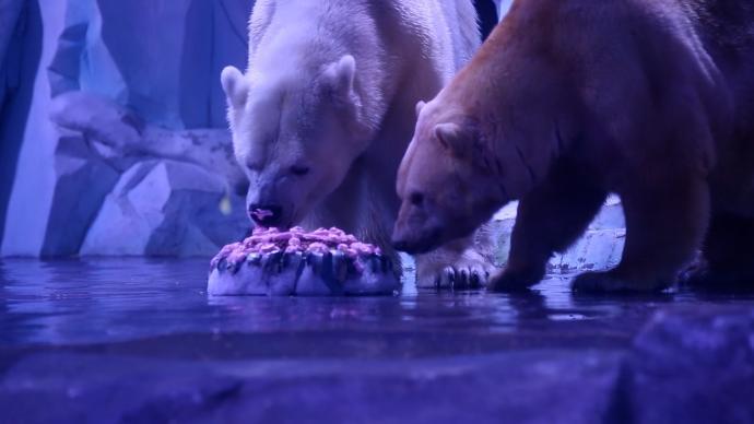 北极熊吃五仁大月饼