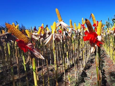 中海化学农业增值创新技术实现商业应用 助力秋粮增收