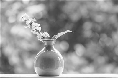 风动菊花香满枝
