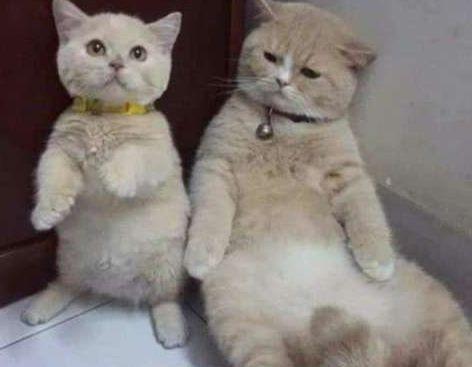 猫宝宝跟猫妈妈撒娇,猫妈妈躲来躲去,嫌弃的不行!