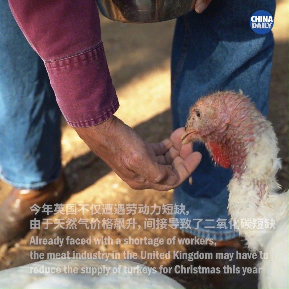 二氧化碳短缺 英国或将面临圣诞节火鸡供应危机
