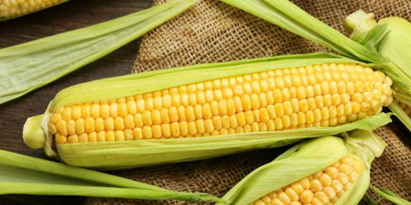 农业农村部习银生:玉米价格存在回落风险 但依然处于较高水平