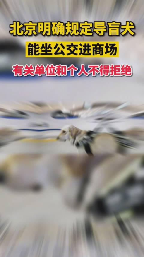 北京明确导盲犬能坐公交进商场