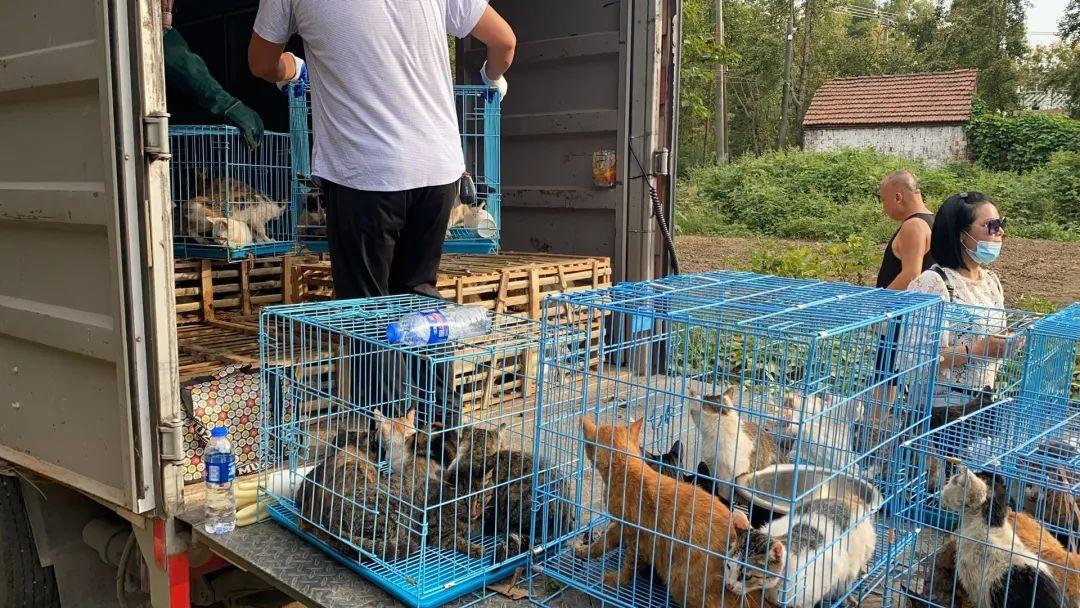 江苏一废弃学校滞留大量猫 市长热线:正在救助