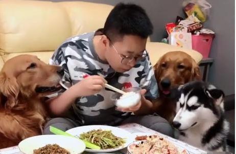 金毛不偷肉吃,反倒偷了根大葱,主人:这狗的智商还有救吗?