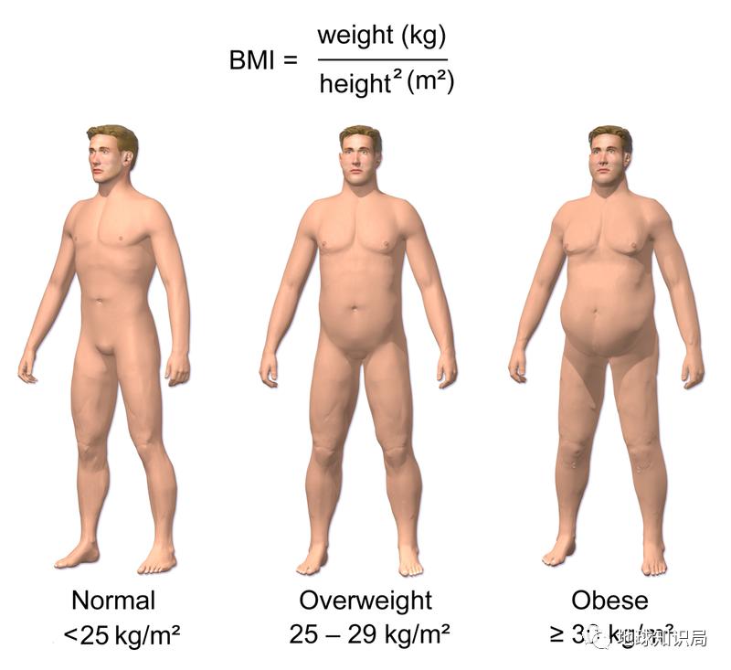美国人为什么这么胖?