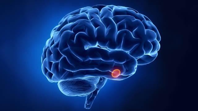 什么是脑垂体?它与身体哪些功能有关?医生告诉你