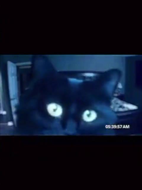 半夜的猫都在干什么?养猫人狠狠懂了