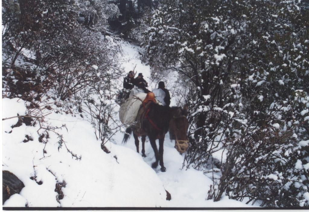"""警察故事丨木里藏族自治县:""""马背上的派出所""""深受农牧民欢迎"""