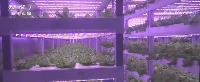 新型电力自供给集装箱式植物工厂解决恶劣环境下边海防部队蔬菜生产难题
