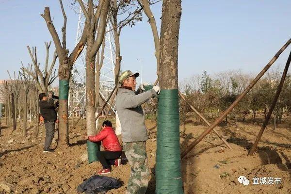 """宜城市园林管理局:各式""""保暖衣""""助力园林植物安全越冬"""