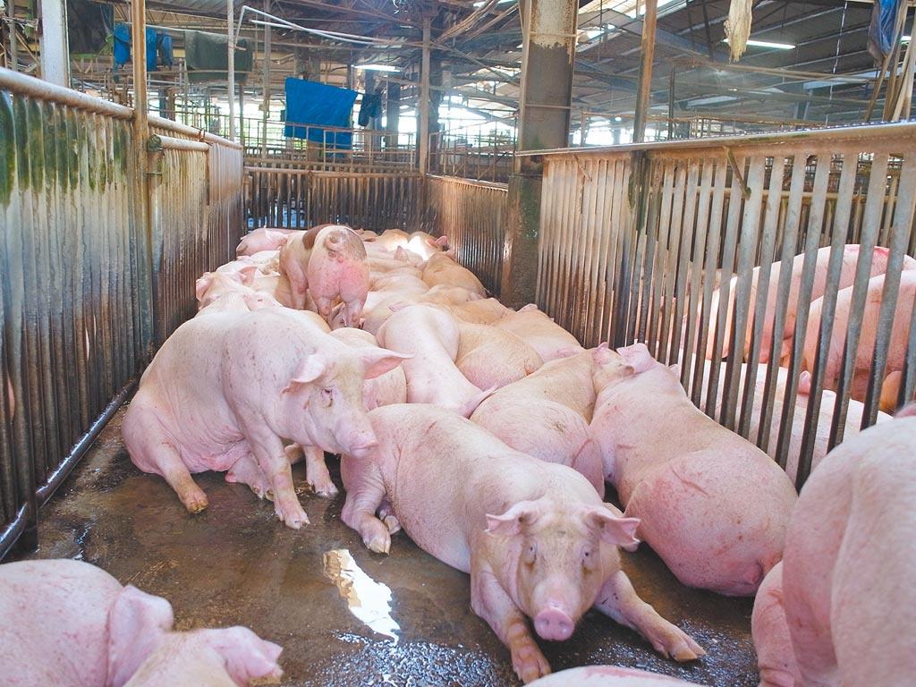 贸易协议没影、克拉夫特不来 台湾网友轰:吃莱猪到底得到三小?