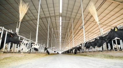 国际品牌杀入山东低温巴氏奶市场,奶业下一个风口已经打响