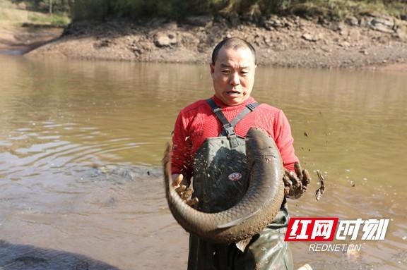 麻阳苗乡:腊月天气佳 水库捉大鱼迎新年