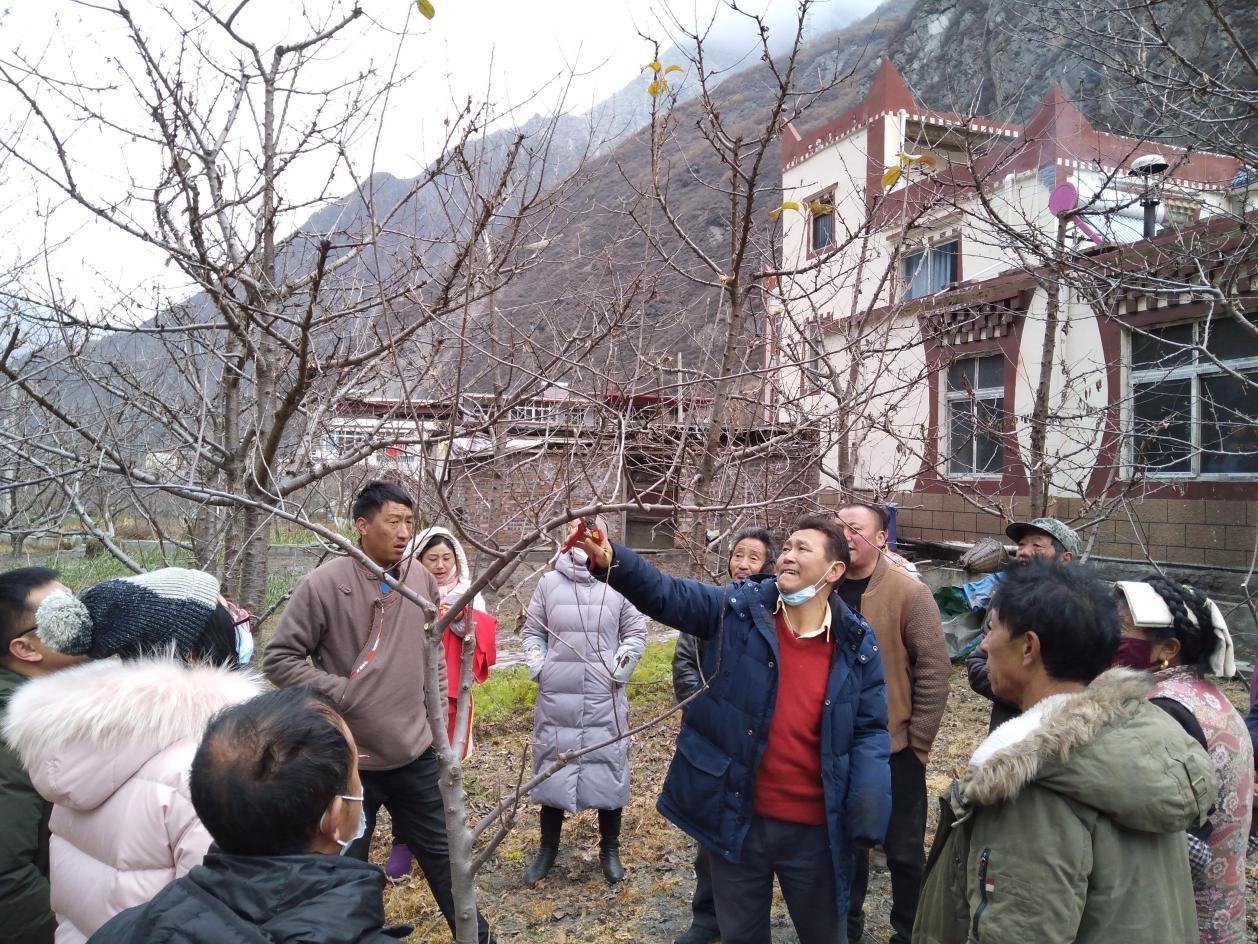 理县积极开展冬季果树修剪培训