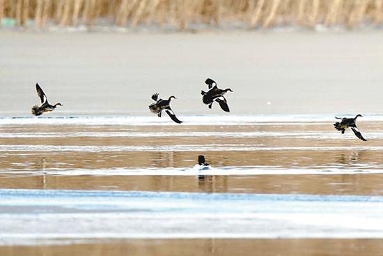 鸟儿乐居园博湖