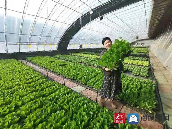 随时能吃上新鲜蔬菜|山东寿光孙家集街道探索活体叶菜种植新模式