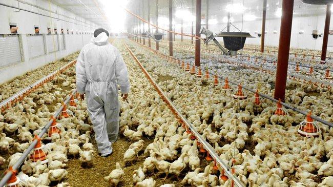 为防止禽流感蔓延,孟加拉国无限期禁止从印度进口禽蛋产品