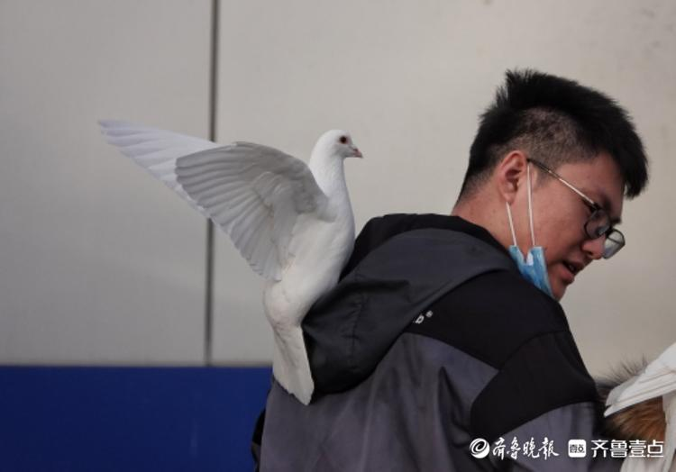 动物园内,鸽子与游客和谐相处