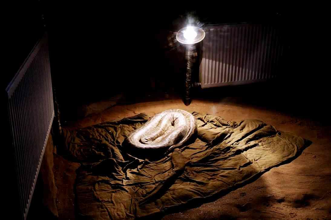 铺棉被装浴霸灯,长沙生态动物园动物安然过寒冬