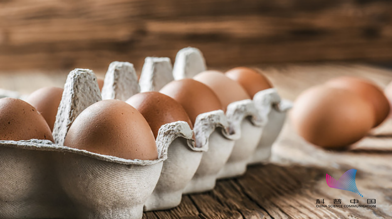发烧不能吃鸡蛋?真相是……