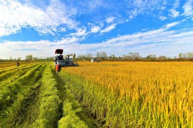 观中国 | 中国农业大学教授:大国耕地保护之痛