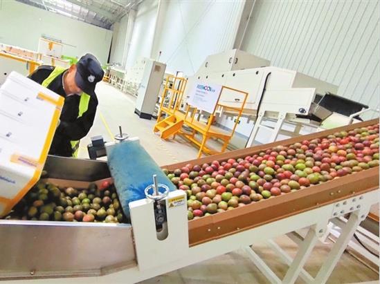云南与阿里平台合作建立水果标准——数字农业基地助云果出滇