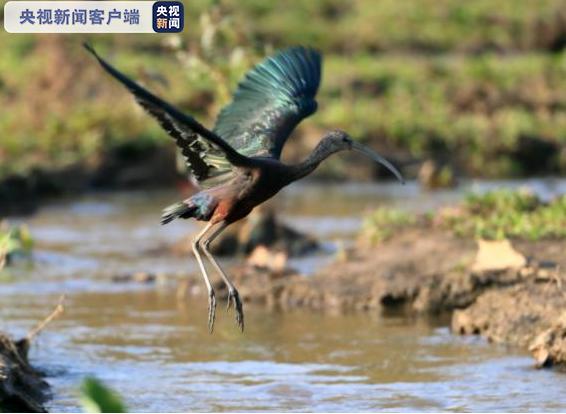曾一度认为在我国灭绝的这种动物,又在云南盈江出现了!