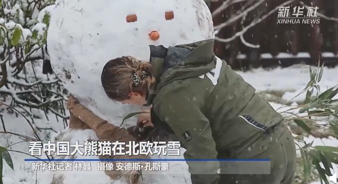 中国大熊猫在北欧玩雪,萌翻了!网友:差点以为是熊猫堆的雪人!