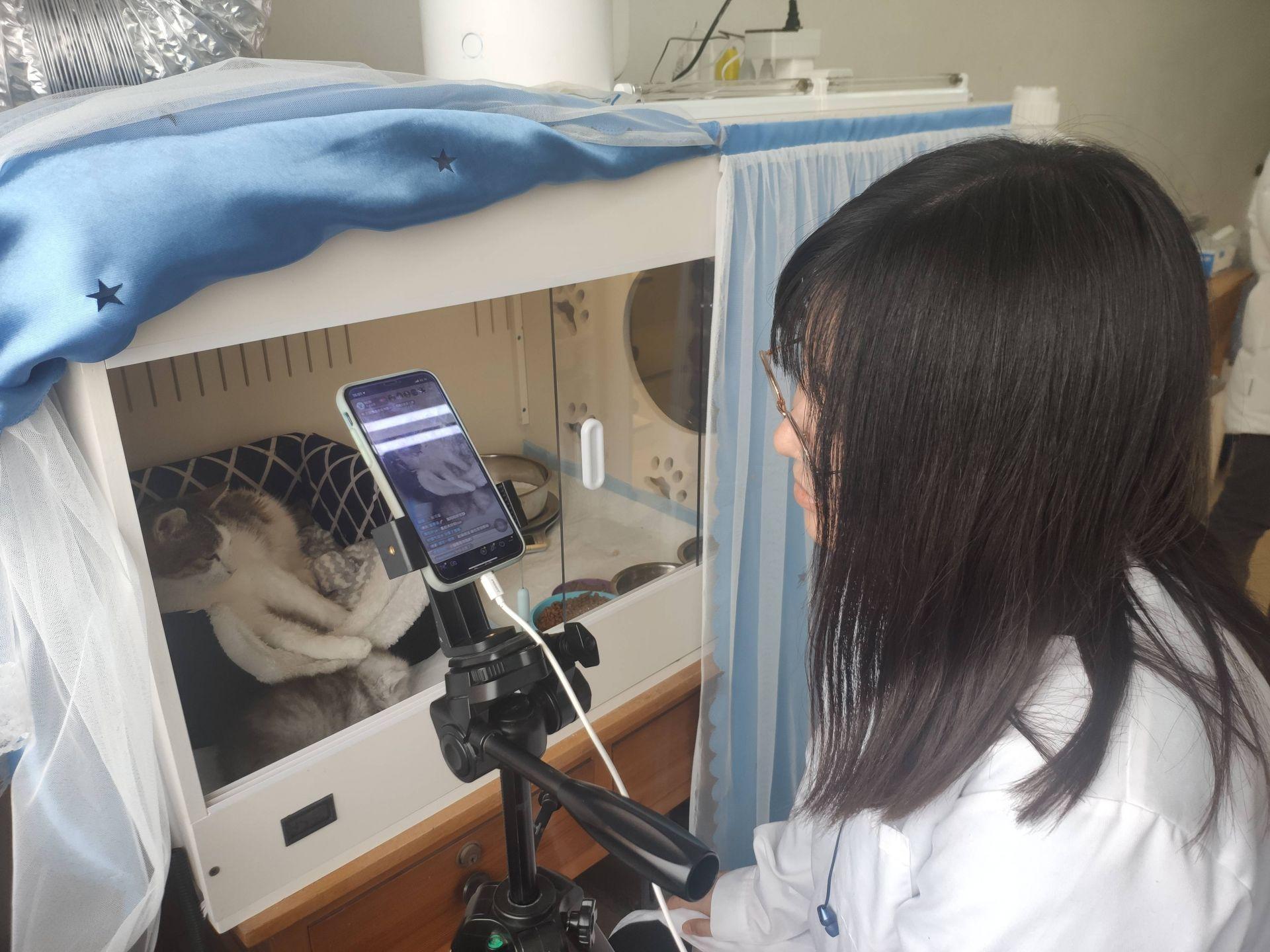 探访青岛农业大学实验室,揭秘克隆猫在青诞生的故事