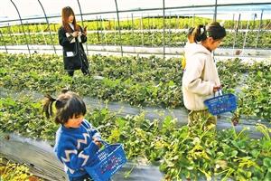 大理州巍山县:农旅融合助增收