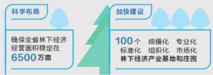 云南省多举措促进林下经济高质量发展