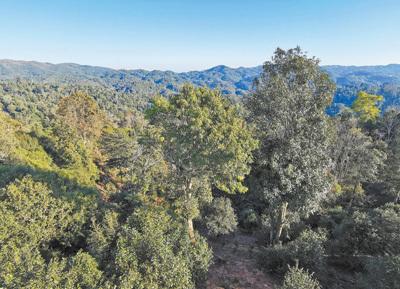 西双版纳有村民为提高茶叶产量毁林,云南开展专项整治