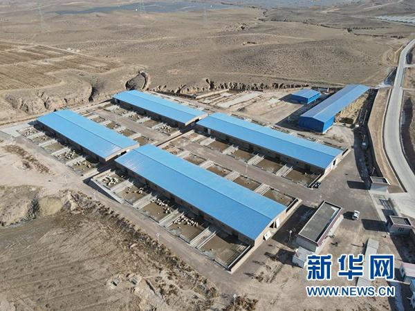 这是1月7日拍摄的宁夏吴忠市红寺堡区龙源村滩羊产业科技扶贫基地(无人机照片)。新华社记者 唐如峰 摄