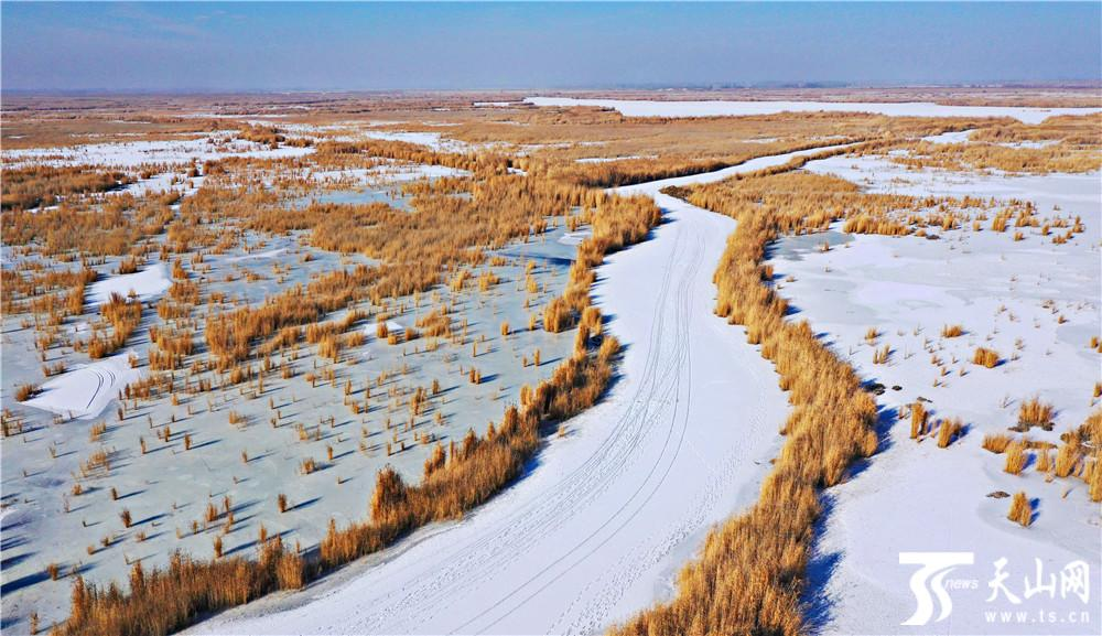 【高清组图】冬赏博斯腾湖万亩芦苇 别有一番韵味