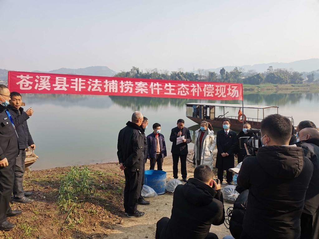 苍溪县一村民非法捕鱼后被责令增殖放流鱼苗10000尾