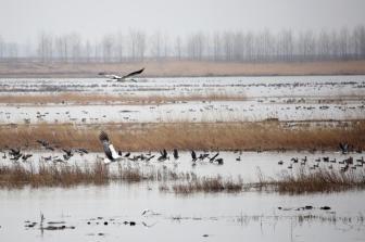 中国拟立湿地保护法 对湿地实行分级管理及名录制度