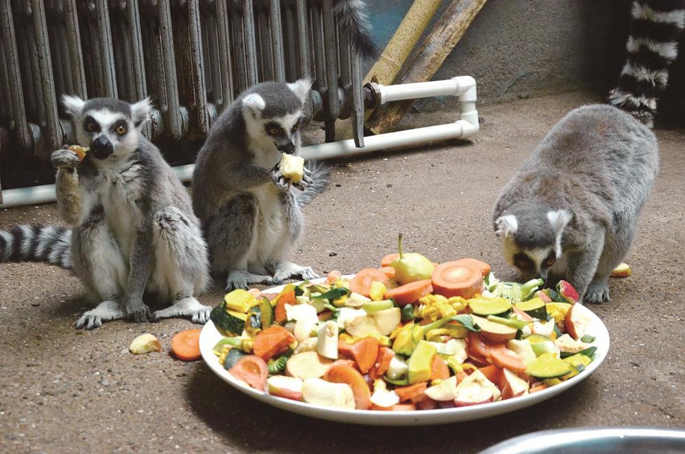 西宁野生动物园小动物过腊八节