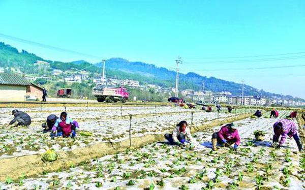 整合坝区资源 大力发展蔬菜产业