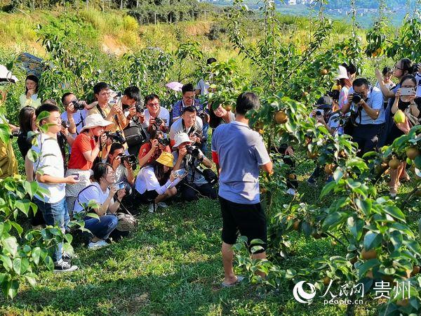 """贵州:""""五个导向""""奋力开启农业农村现代化新征程"""