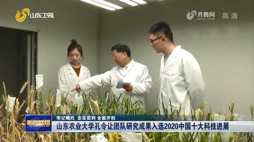 """20年持续研究 终于找到小麦""""癌症""""克星!山东农业大学孔令让团队研究成果入选2020中国十大科技进展"""