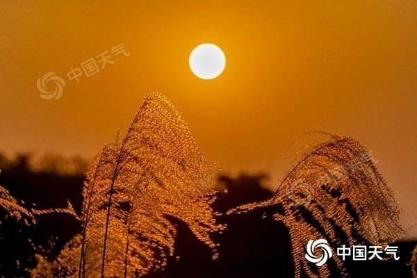 """近日,重庆南川""""絮花""""与暖阳相称,美如画。(图/瞿明斌)"""