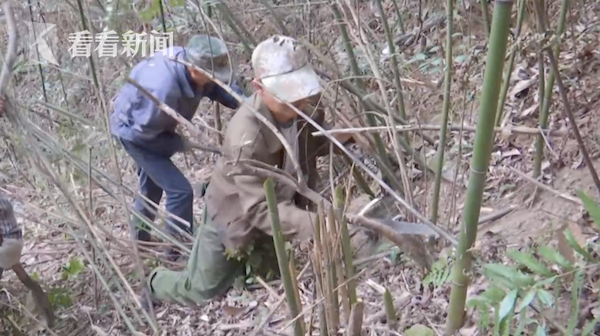 视频|不计酬劳!6名村民自发修复3公里山间古道